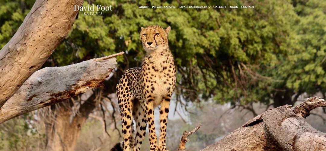 David Foot Safaris website design