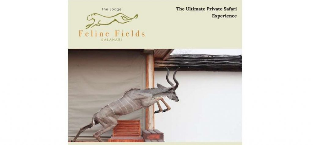 Feline Fields email newsletter