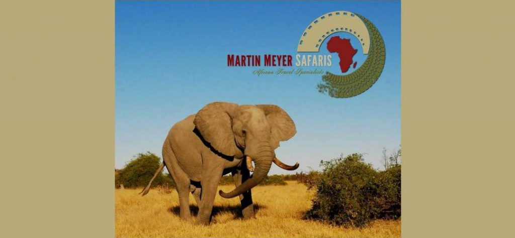 Martin Meyer Safaris email newsletter design
