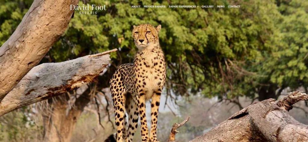 David Foot Safaris website design