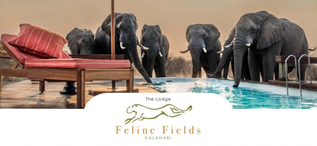Brochure design for Feline Fields The Lodge