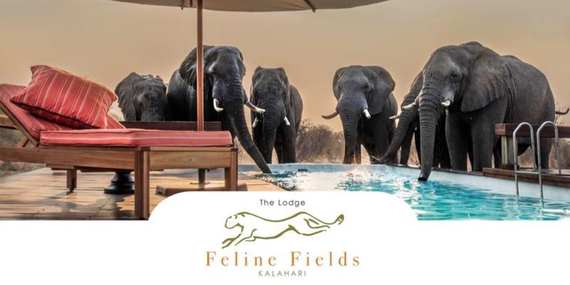 Feline Fields brochure