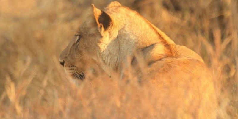 Khwai-Kalahari Journey brochure