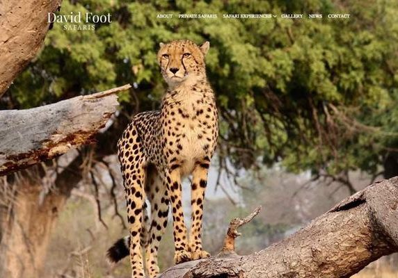 David Foot Safaris website banner